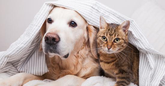 Cosa ci dice la cute del nostro animale?