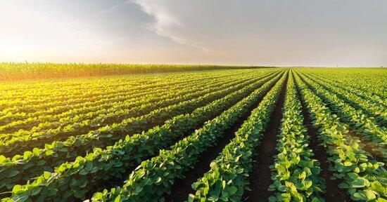 Gli EM (Microrganismi Effettivi) in Agricoltura