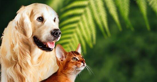I benefici della spirulina per cani e gatti