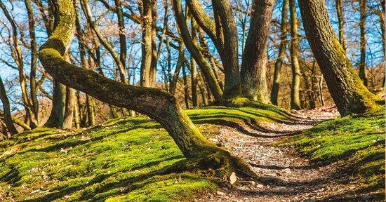 Il bosco che ci cura e ci rende persone migliori
