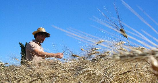 Tutta farina del suo sacco: Amedeo e la pasta di grani antichi toscani