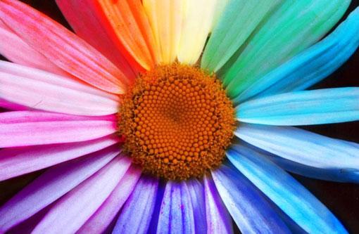 Colori per la nostra casa - Immagini estive a colori ...