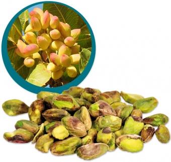 pistacchio noccioli biologici crudo vegan