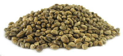 semi-canapa-sativa-hemp-seeds