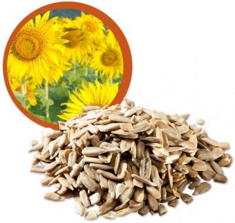 semi girasole biologico vegano senza glutine crudo